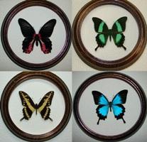 Papilionidae 200х200